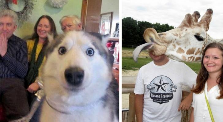 23 animaux qui ont fait irruption sur des photos au milieu des personnes... et c'est un CHEF D'ŒUVRE.