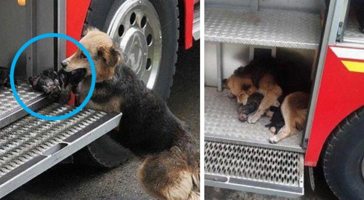 13 Ereignisse, in denen Hunde die Menschen durch unglaublich heldenhafte Taten überrascht haben