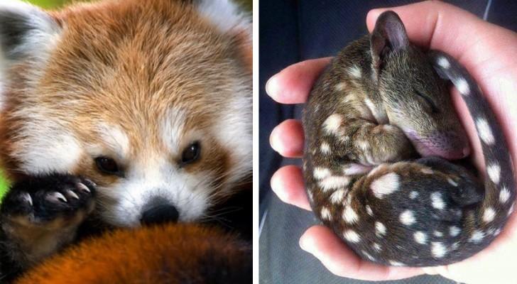 18 tierische Kuschelbabies die man unbedingt knuddeln möchte