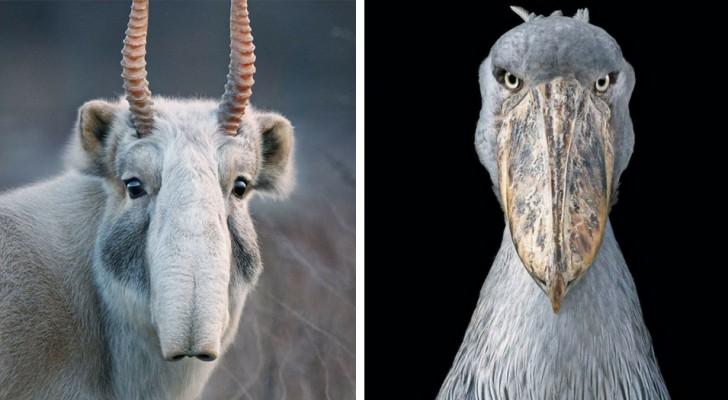 Um fotógrafo passou 2 anos fotografando animais em extinção: o resultado é de uma beleza comovente