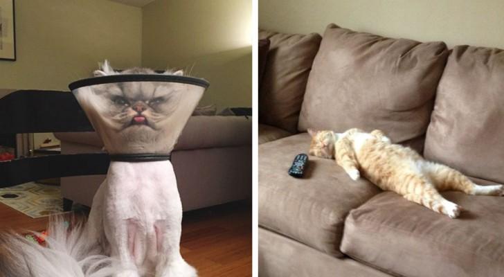 20 fotos de gatos que para los propietarios de gatos seran bien conocidos