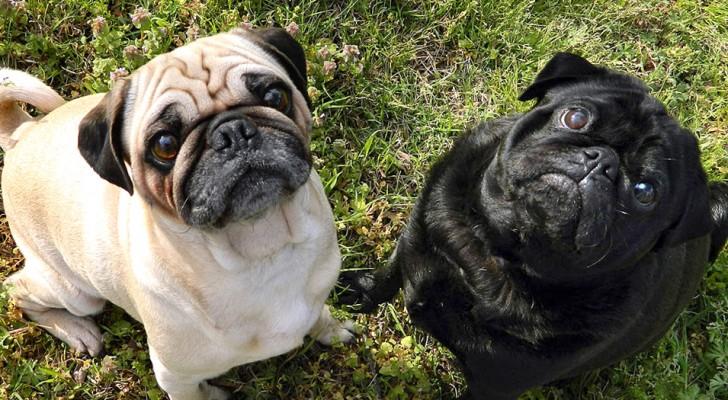 Wenn du diese Hunde wirklich magst, darfst du sie nicht kaufen