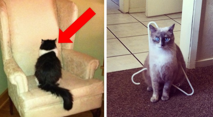20 lessons that are learned when you live with a cat
