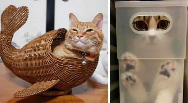 25 Beispiele in denen Katzen gezeigt haben, dass sie außergewöhnlich biegbar sind