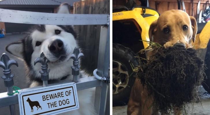 23 Hunde die dein Herz erobern, ohne sich allzu sehr anzustrengen