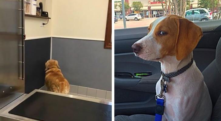 Il momento esatto in cui questi cani hanno realizzato che stanno andando dal veterinario e non al parco