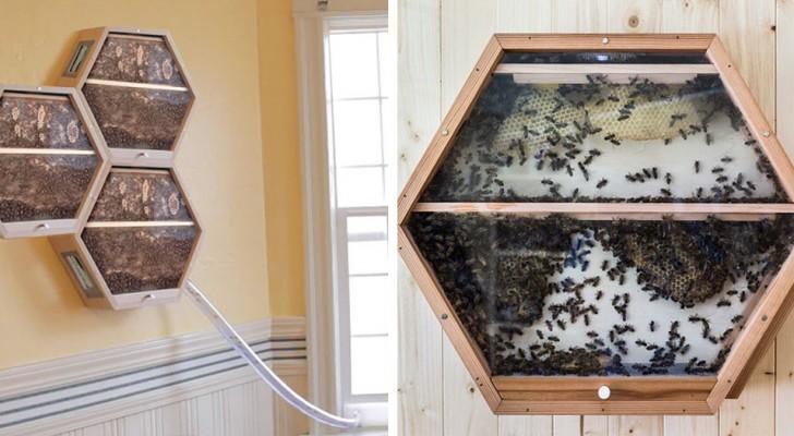 Cette entreprise permet d'installer des ruches dans votre salon et de voir les abeilles sauver le monde