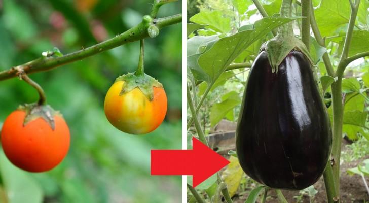 9 impresionantes imagenes nos muestran como los vegetales cambiaron en el curso de los siglos