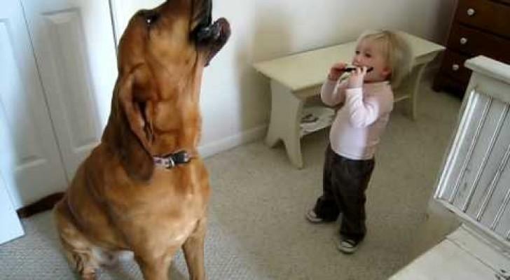 O bebê e o cachorro que tocam blues