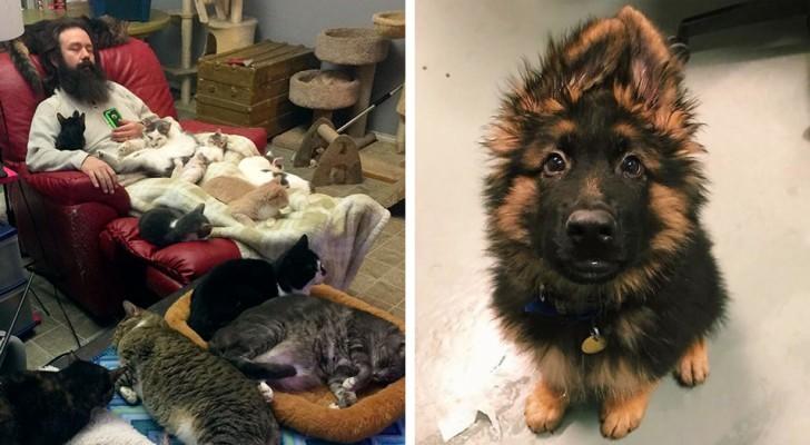 25 photos prises dans des refuges pour animaux montrant la tendresse de ces créatures en manque d'amour