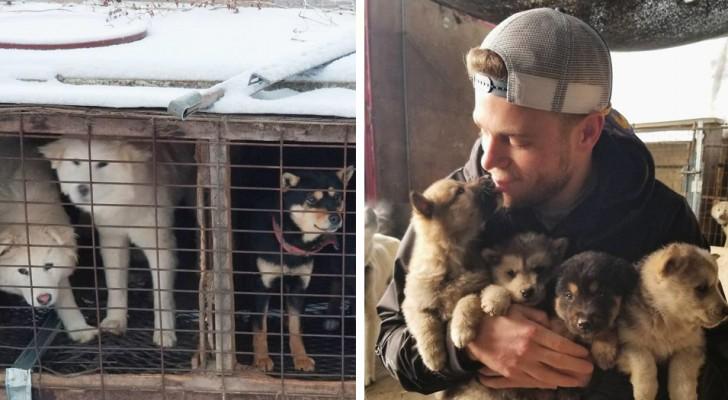 Deze Olympisch skiër heeft meegeholpen met het redden van 90 honden van de slacht in Zuid-Korea