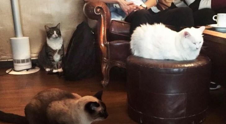 7 magnifiques endroits où profiter d'une boisson chaude entouré de chats
