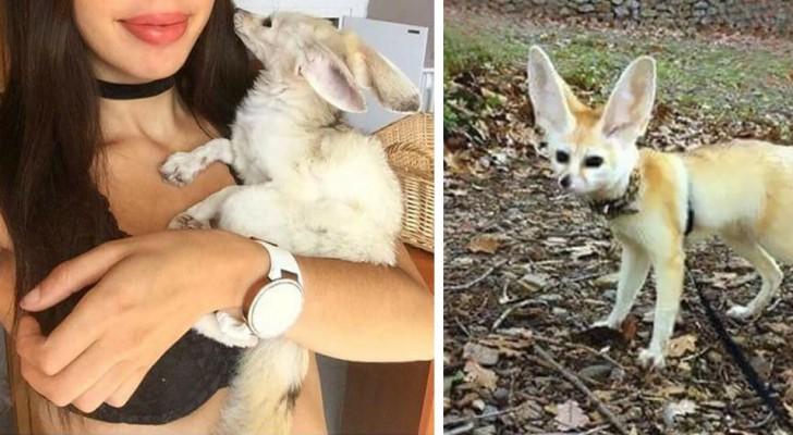 Elle décide de faire suivre à son renard un régime vegan, et voilà le résultat