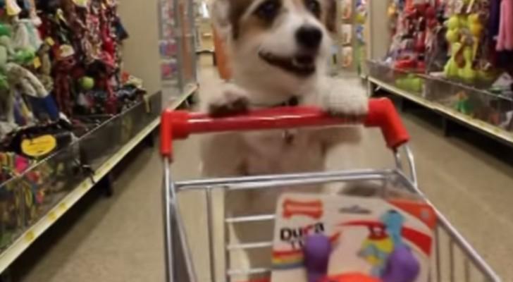 Este maravilloso perrito nos demuestra como jugando se pueden hacer cosas utiles