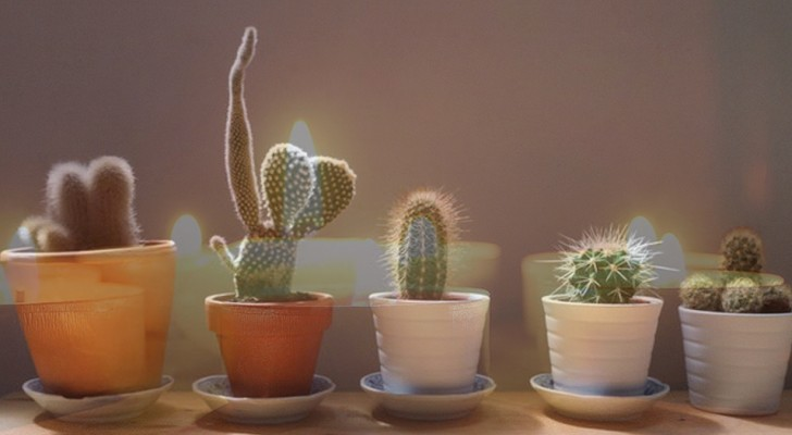Here are 7 protective houseplants and how you should use them!