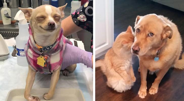 20 volte in cui i cani sono stati i protagonisti di situazioni esilaranti