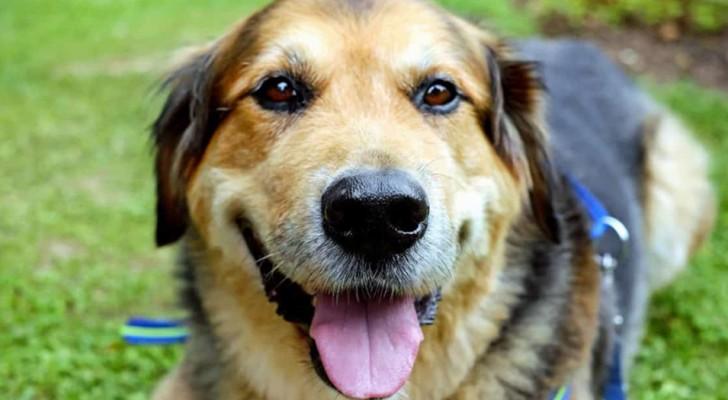 Le mille lezioni di vita che possiamo apprendere dal nostro cane