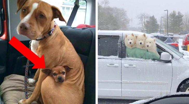 20 lustige Hundefotos, die deinen Tag erhellen werden