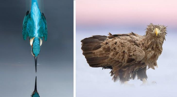 Vogels in al hun grootsheid en gratie in een selectie van foto's van hoge kwaliteit