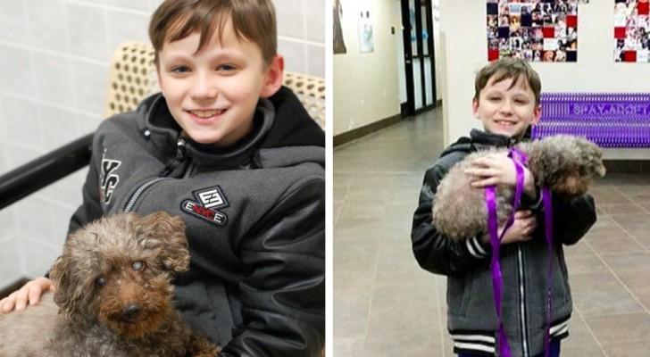 Un bambino si presenta al canile e adotta il cane più anziano che trova: una lezione per tutti!