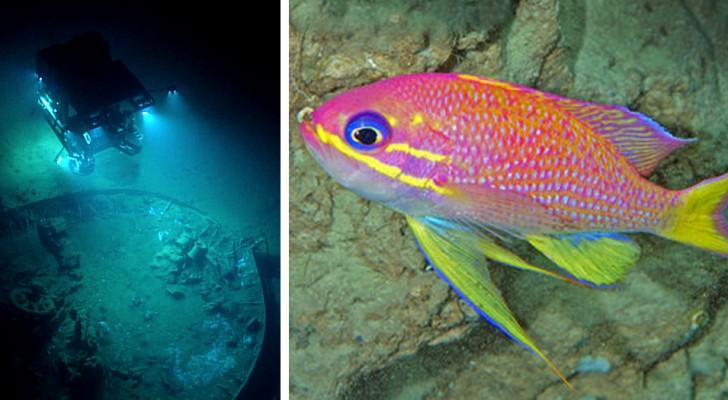 Gli scienziati scoprono una nuova zona dell'oceano in cui vivono specie finora sconosciute