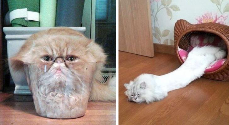 Queste foto dimostrano senza dubbio che i gatti sono fatti di materiale liquido
