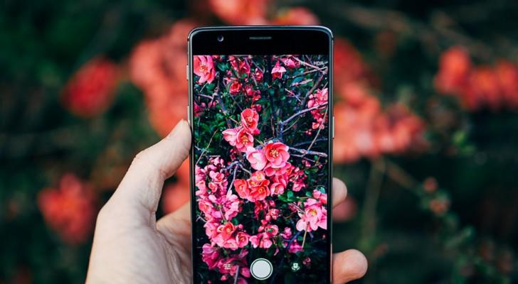 Seek, die kostenlose App, die Pflanzen und Tiere erkennt, indem sie einfach ein Foto von ihnen macht