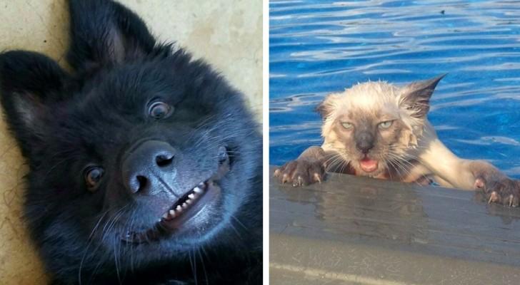 23 lustige Fotos, die zeigen, dass Tiere nichts als Menschen mit Fell sind