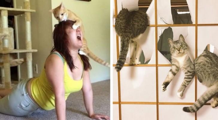 17 foto che dimostrano che i gatti sanno essere gli animali più dispettosi in assoluto