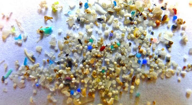 À chaque repas, nous ingérons environ 100 fragments de plastique... issus de la poussière domestique