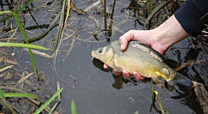 Eine Studie alarmiert: Die Flüsse sind voll mit pharmakologischen Abfällen
