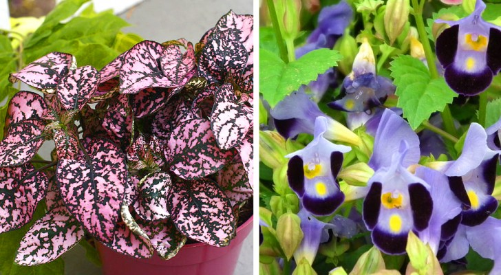10 planten die zelfs in de donkerste hoekjes weelderig groeien