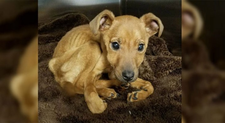 The police find her emaciated in a locked room: now the puppy is unrecognizable