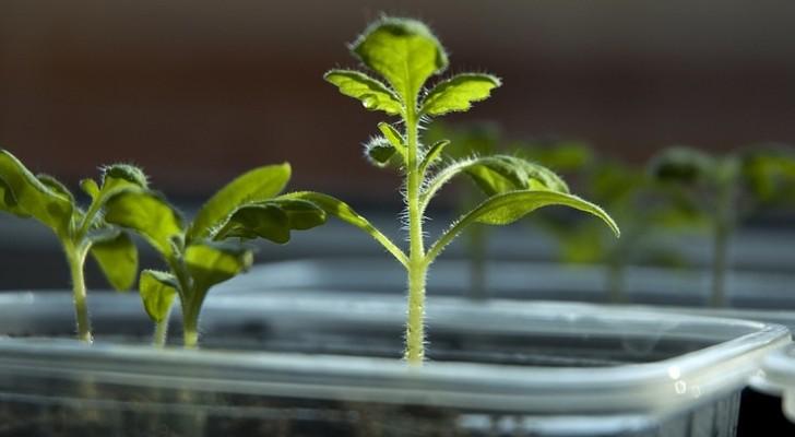 Les scientifiques découvrent que les plantes ont un cerveau qui décide quand elles doivent se reproduire