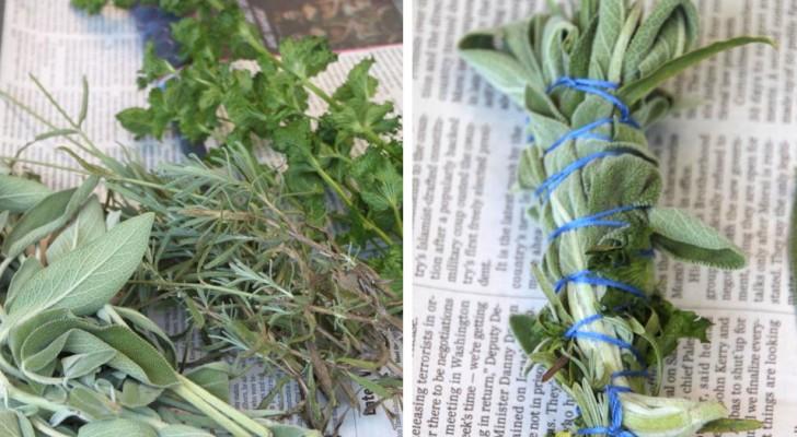 Een natuurlijk afweermiddel tegen muggen: zo maak je er één met de kruiden die je in je tuin hebt