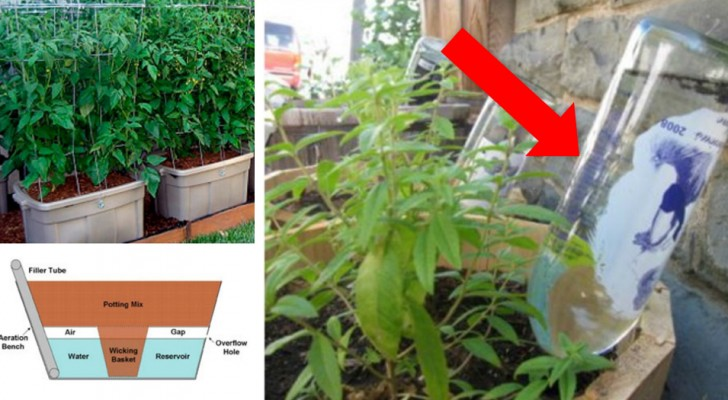 11 systèmes d'irrigation automatique DIY qui faciliteront encore plus le jardinage.