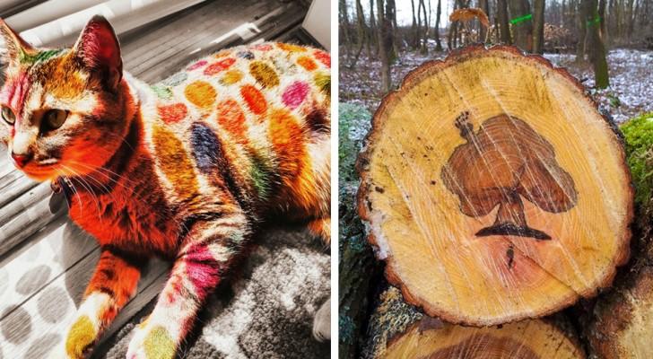 La beauté des petits détails : 23 moments où la réalité se transforme en une œuvre d'art.