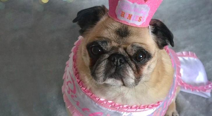 Oubliez la règle des 7 ans : ce tableau vous montre combien d'années votre chien a VRAIMENT !