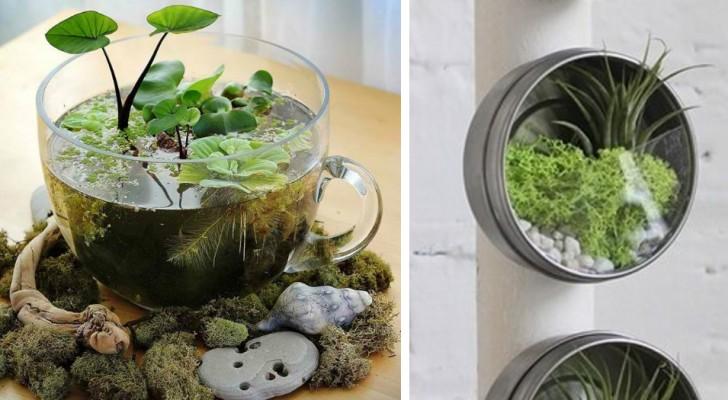 24 precious ideas for creating a terrarium that you must not miss!