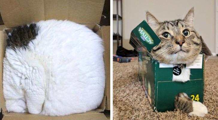 20+ foto di gatti che dimostrano di non avere la più pallida idea di cosa sia un letto