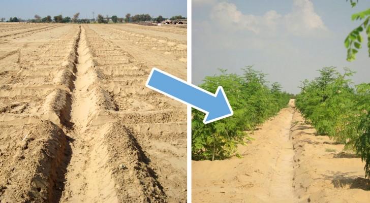 Woestijngrond vruchtbaar maken zonder chemische stoffen: deze uitvinding maakt dat mogelijk