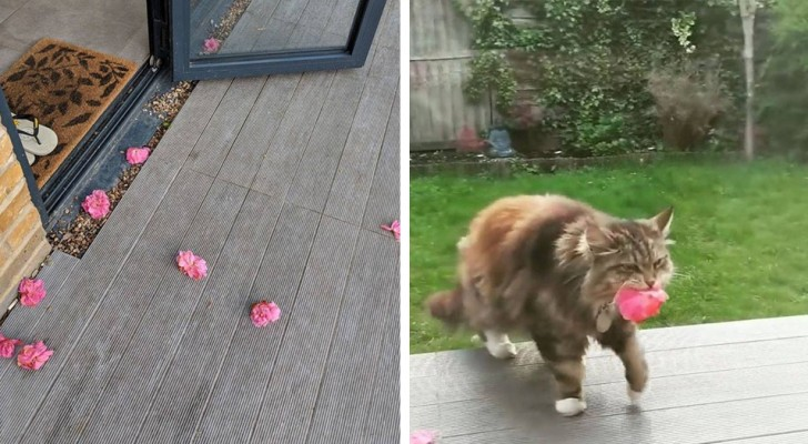 She finds flowers every day outside her front door! Here's the neighbor we all want to have