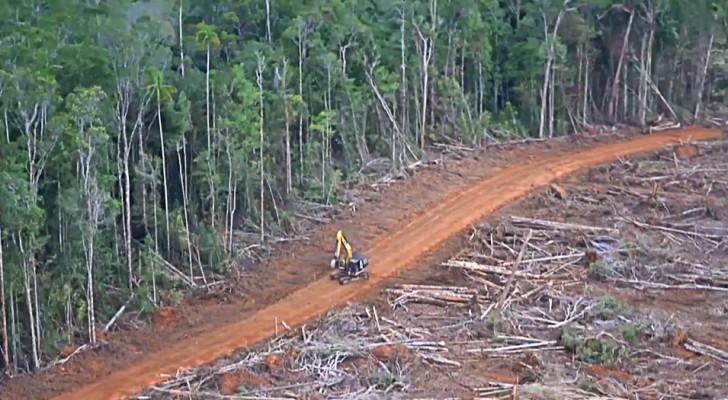 Foreste gigantesche rase al suolo per produrre olio di palma: le immagini non lasciano dubbi
