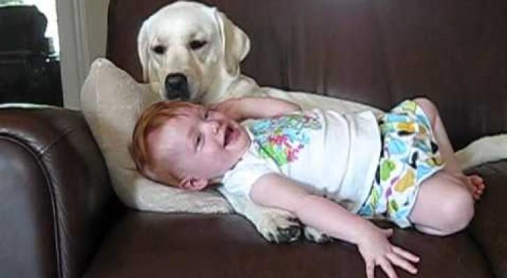 O cachorro e a menininha