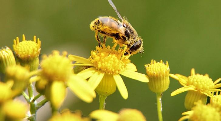 Voici les 7 principales menaces pour les abeilles et comment nous pouvons les aider