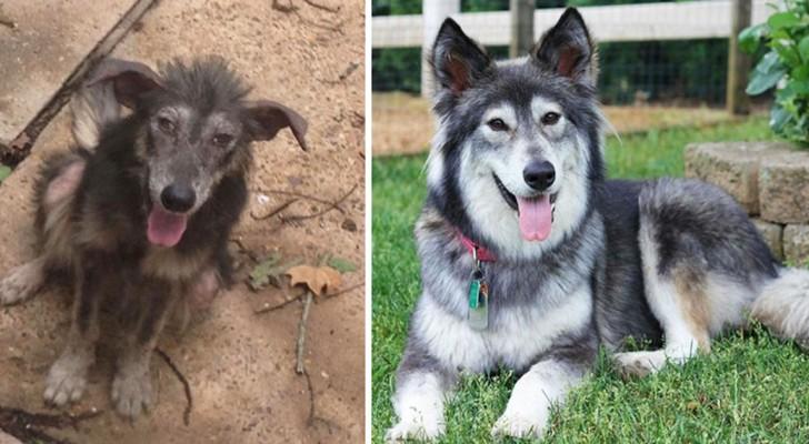 19 trasformazioni di cani prima e dopo l'adozione a cui stenterete a credere