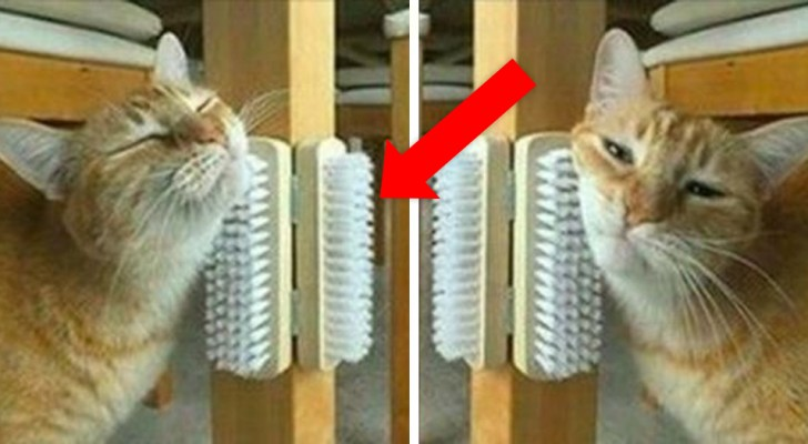10 economical DIY projects to be copied immediately to make your cat happy!
