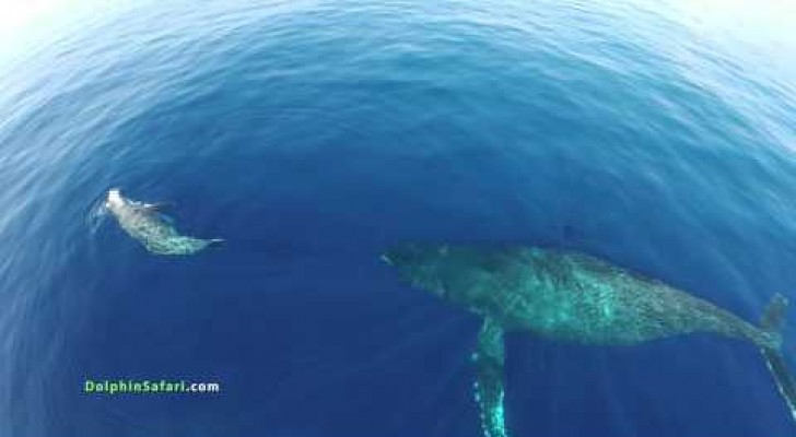 A drone capture an unusual event off the island of Maui