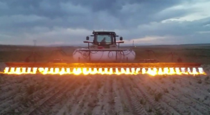 This tractor eliminates weeds without using herbicides --- here is how it functions!