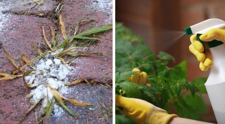 9 natuurlijke herbiciden die je thuis kunt bereiden om onkruid te verwijderen en de bloemen te beschermen